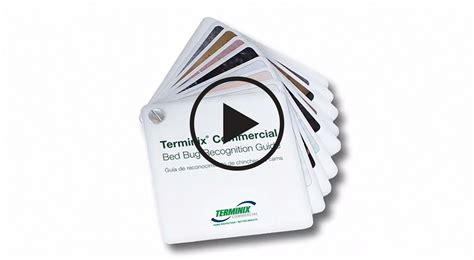 terminix bed bugs cost terminix bed bugs cost commercial bed bug treatment terminix