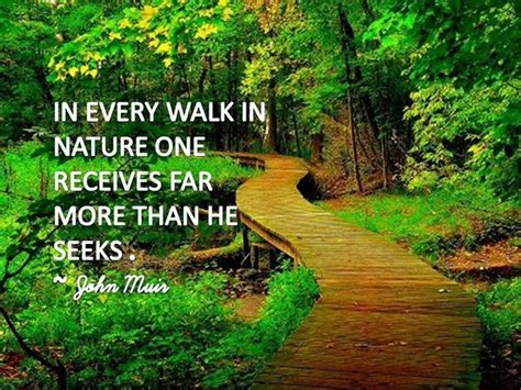 Nature Quotes 172 Best Images About Nature Quotes On Trees