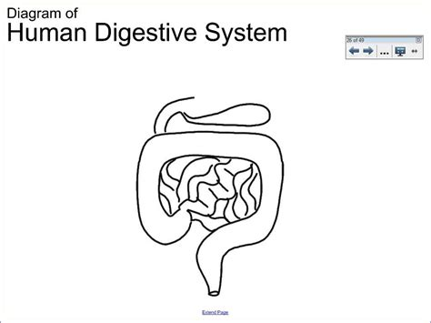 how to draw a system diagram 6 1 human digestive system diagram