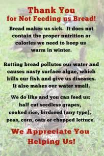 feed the ducks properly hawksbill greenway