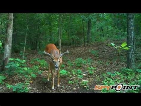 big buck caught on trail camera 2016 : s7 youtube