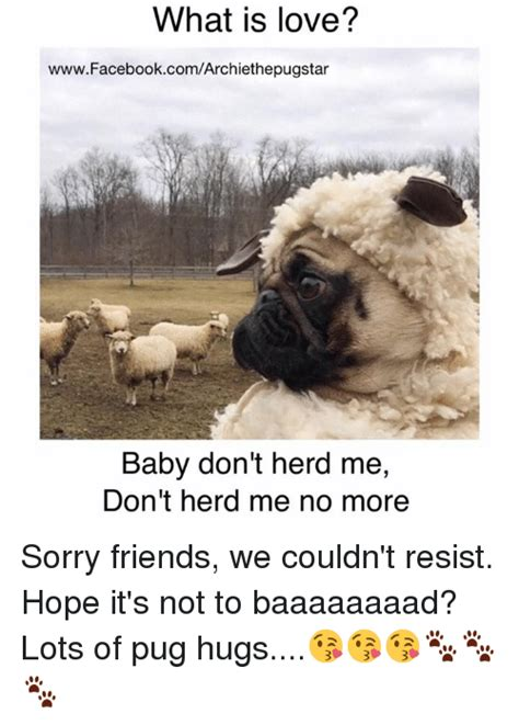 pug herd 25 best memes about baby dont herd me baby dont herd me memes