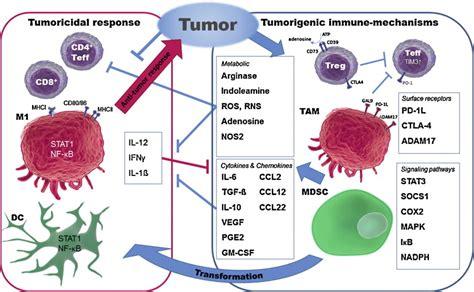 targeting pattern recognition receptors in cancer immunotherapy rnai nanomaterials targeting immune cells as an anti tumor