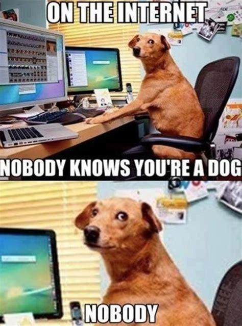 funny dog memes 15 pics