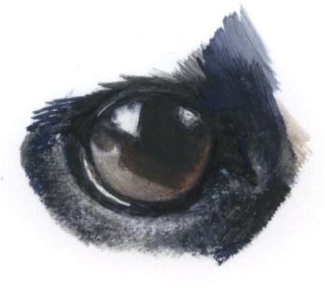 pug eye problems pugs eye problems