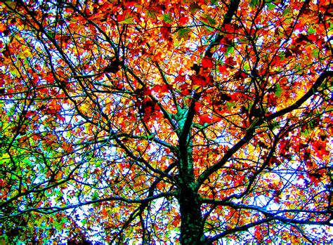colorful tree elevation of essex county ma usa maplogs