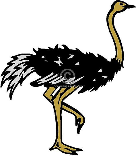 ostrich clipart free ostrich clip clipart panda free clipart images