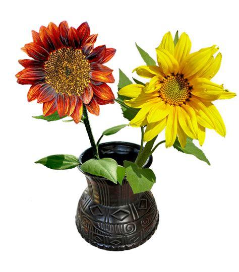 vase mit blumen kostenlose illustration vase blumen sonnenblumen