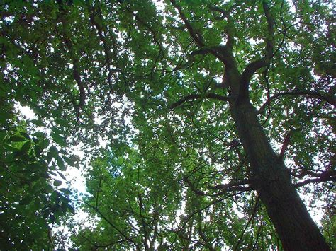 The Canopy Canopy