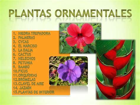 Tipos De Plantas Ornamentales