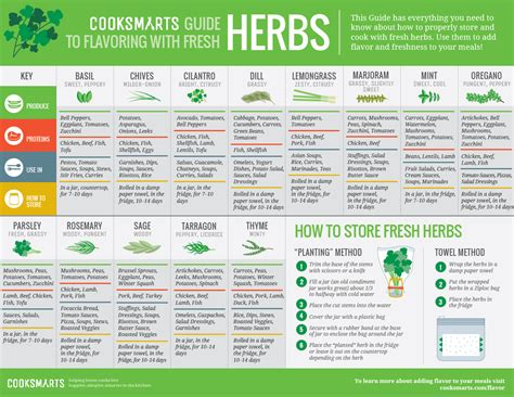 herbs chart balancing flavors other nifty charts shock munch