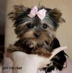 free puppies ocala fl dogs ocala fl free classified ads