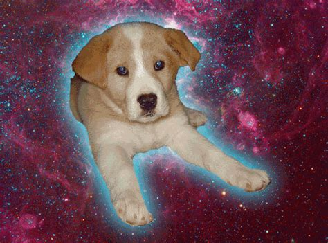 puppies in space animated gif