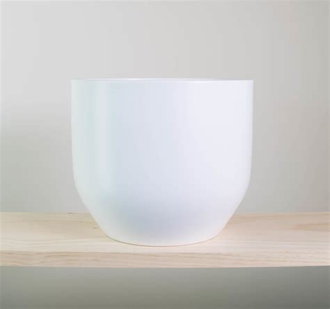 white pot peace lily in a white plant pot modern fresh