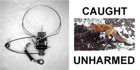collarum® stainless steel humane wild fox animal snare