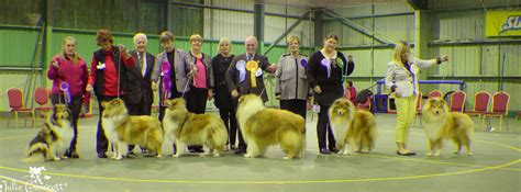 Blue Opal Special Edition The Fantastic Paradoxes Of Sandro Prete midland collie club chionship show february 2016