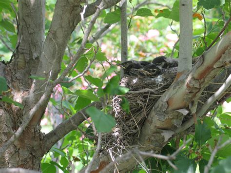 birds nest in tree is your plant garden for the birds dyck arboretum