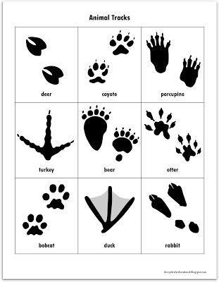 printable animal feet free animal tracks matching game printables vinyls