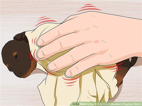how to keep newborn puppies warm how to keep orphaned newborn puppies warm 8 steps with pictures