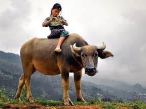 child water buffalo l e forte come la morte