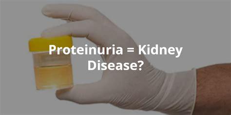protein kidney disease wellness lab health info proteinuria kidney disease