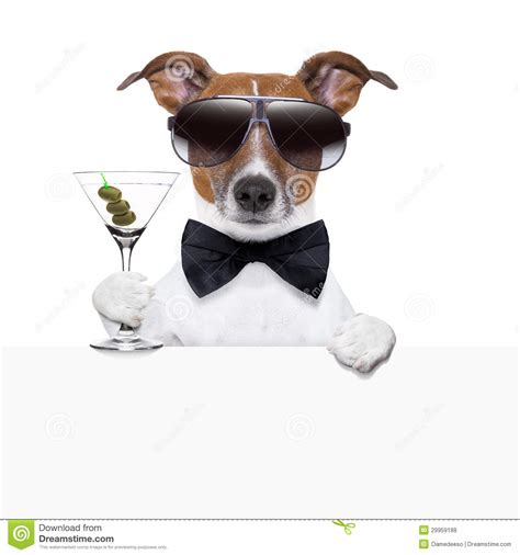 cocktail dogs cocktail banner stock photo image of drink 29959188