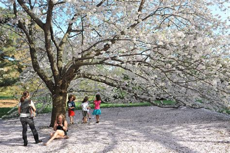 New York Botanical Garden Membership Ny Botanical Garden Membership Garden Ftempo