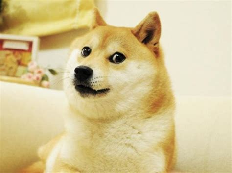 Doge Meme Template - doge blank template imgflip