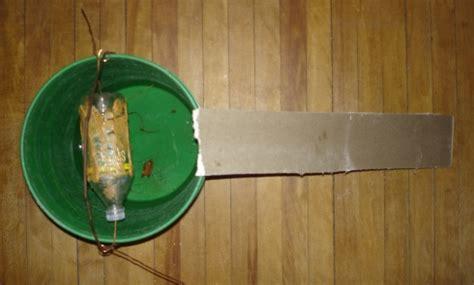veleno per gatti fatto in casa fatto in casa trappola per topi semplice ed efficace che