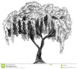 sakura tree pencil sketch stock photo image 18409240