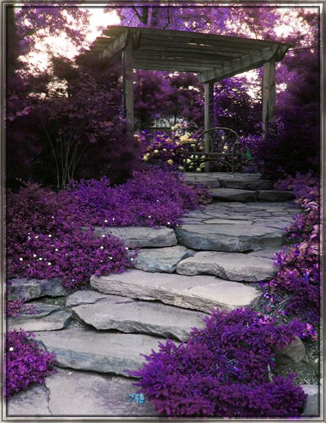 Purple Flower Garden Rituals Naturally Beautiful Purple