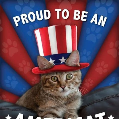 Funny Patriotic Memes - 17 best images about 4th of july cats on pinterest