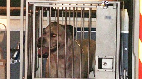 wann hund einschl fern darf vermieter hund verbieten freie entscheidung
