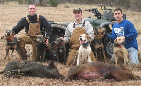 hogs and dogs hogs breeds picture