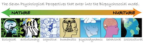 what are the seven contemporary perspectives in psychology thoughts on nature vs nurture rhap so dy in words