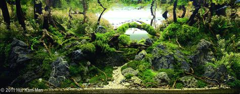 aquascape forest aquascape exles aquascapers