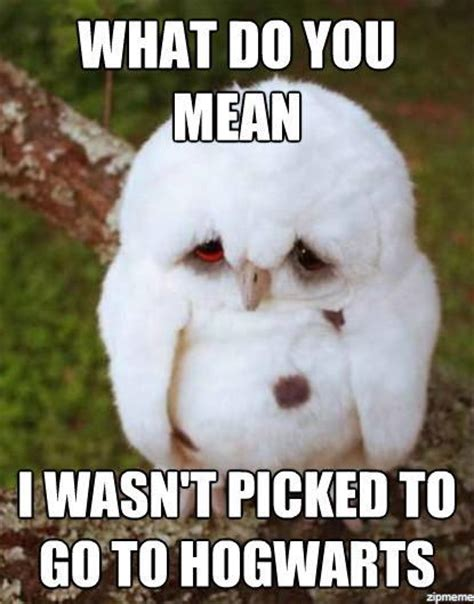 Poor This Is So Sad by Top 30 Animal Memes Quotes Words Sayings