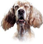 what causes sneezing in dogs sneezing nasal discharge in dogs puppies