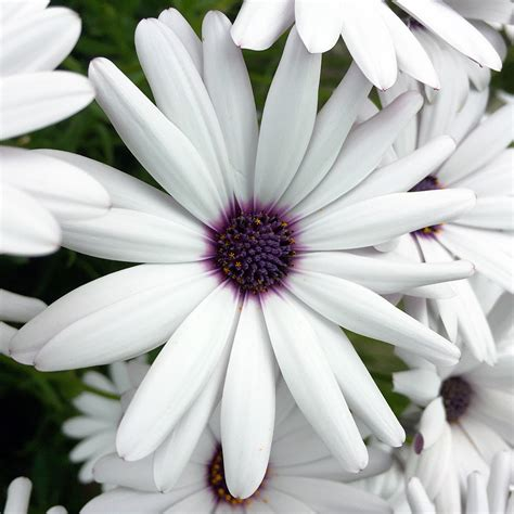 flower wallpaper for macbook pro ne81 flower purple white spring nature