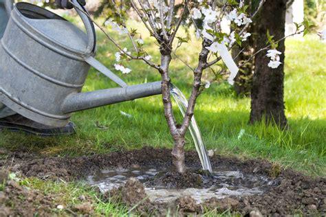 baum wie haus pflanzen 4 tipps zum baum pflanzen hausidee dehausidee de