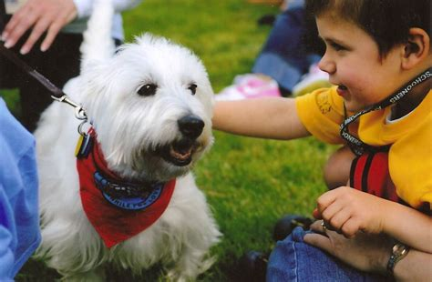 for therapy dogs therapy dogs international