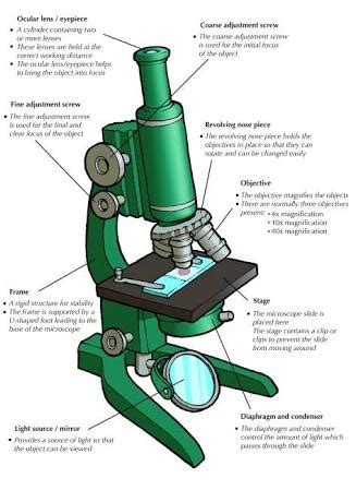 compound light microscope parts and functions image result for compound light microscope parts and their