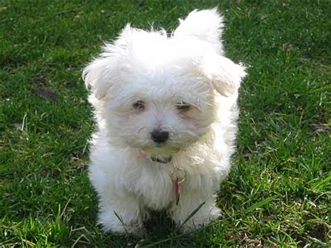 breeds alphabetical pictures of breeds in alphabetical order breeds picture
