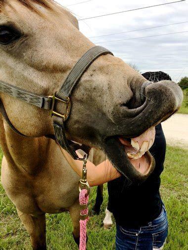 certified  equine massage