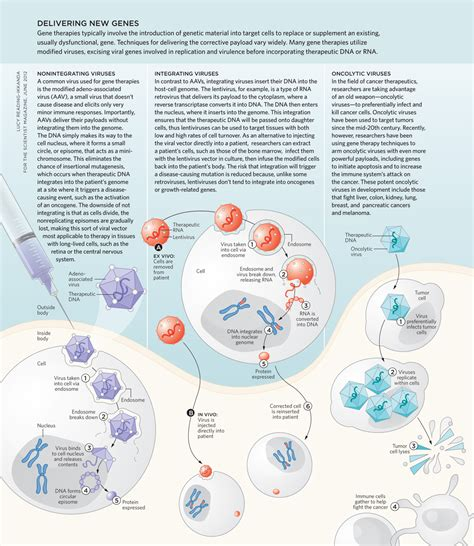 Dna Sles Are In by Targeting Dna The Scientist Magazine 174