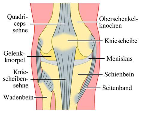 knieschmerzen beim liegen file kniegelenkvorne png wikimedia commons