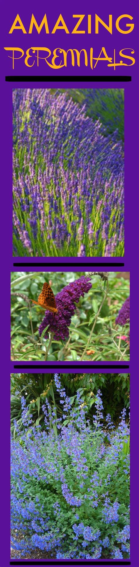 lots of gnats in backyard 97 best plants images on pinterest plants landscaping
