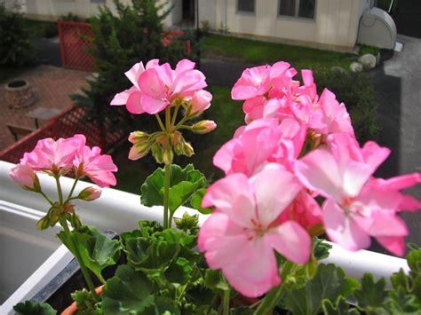 imagenes jardines con flores imagenes de plantas con flores wallpaper hd 4 en hd