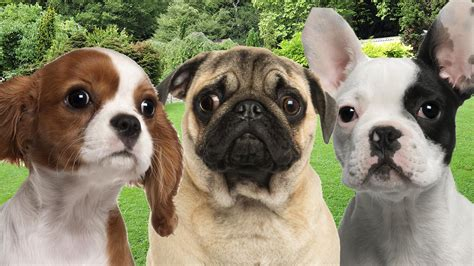 how do dogs to be to breed best breed