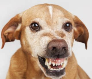 photos dogs how personality affects a person s chances of a attack psychology today